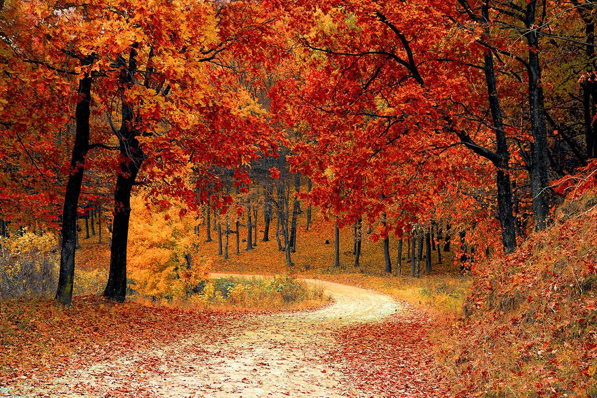 Marcaser - otoño